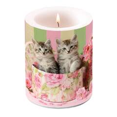 Candle Big Cats In Box
