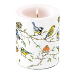Candle Big Birds Meeting