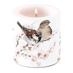 Candle Small Sparrows Blossom