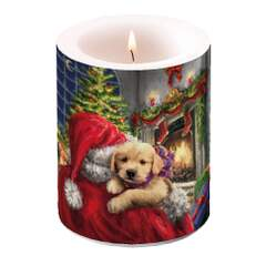 Candle Big Puppy At Fire